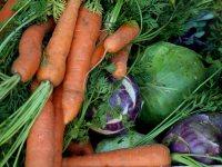 potager-cramoisi-legumes