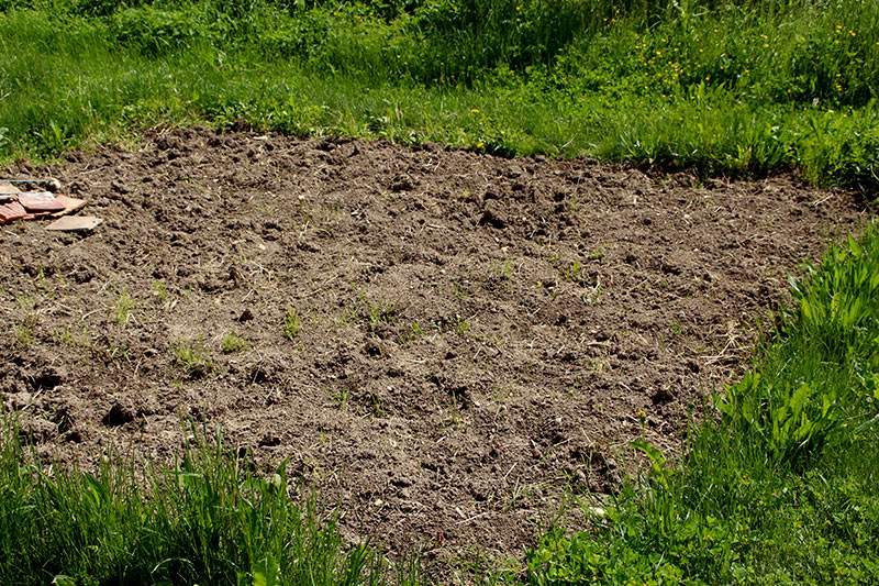 potager-cramoisi-carre-de-terre