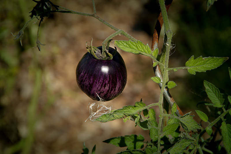 Index of /wp-content/gallery/Grand-Jardin-Potager-cramoisi