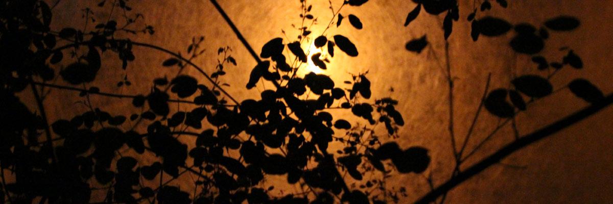 Banniere-La-nuit-les-arbres2