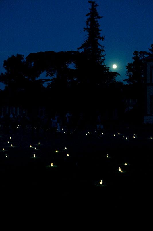 les-minuits-la-nuit-les-arbres-accueil