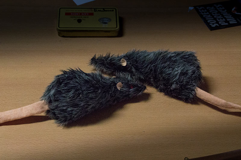 LES-MINUITS-Le-Prince-Masqué-Répétitions-avant-la-premiere-Rats-01