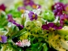 Salade au pavot