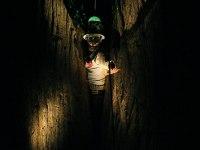 les-minuits-la-nuit-les-arbres-arbre-monde-2