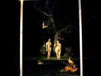 les-minuits-la-nuit-les-arbres-adam-et-eve