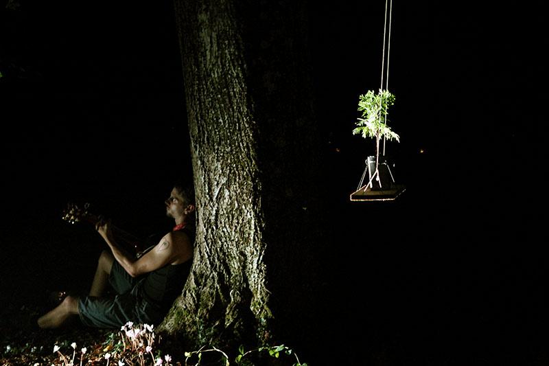 les-minuits-la-nuit-les-arbres-balancoire