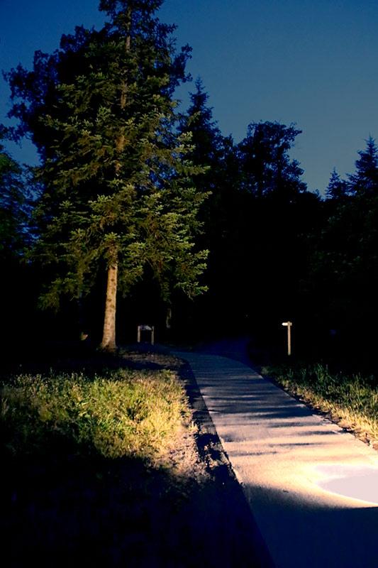 les-minuits-la-nuit-les-arbres-repetition-lumieres