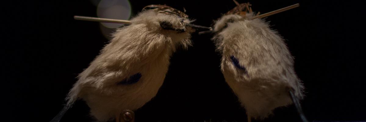 Banniere-Mariage-des-oiseaux