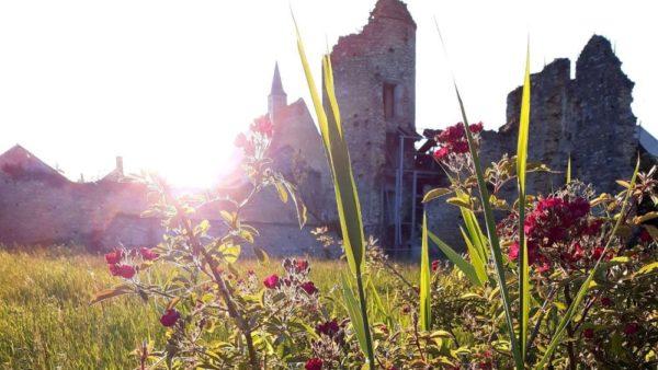 Photohraphie du rosier Mademoiselle des Minuits devant les ruines du château