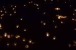 Les Minuits-Nuit dans le marais de la porte-11