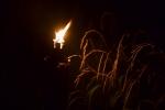 Les Minuits-Nuit dans le marais de la porte-09
