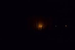 Les Minuits-Nuit dans le marais de la porte-10