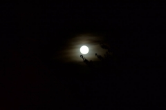 Les Minuits-Nuit dans le marais de la porte-16
