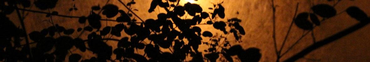Banniere-La-nuit-les-arbres