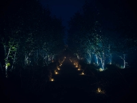 Chemin de bougies à travers les arbres-1