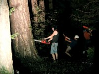 les-minuits-la-nuit-les-arbres-bucherons