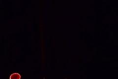 Les Minuits-Nuit dans le marais de la porte-08