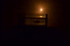 Les Minuits-Nuit dans le marais de la porte-12