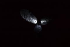 Les Minuits-Nuit dans le marais de la porte-14